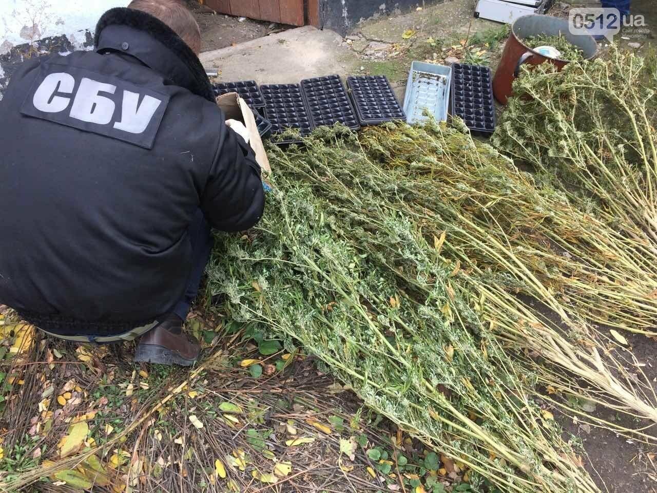 В Баштанке СБУ разоблачила группировку, которая выращивала элитные заграничные семена конопли , фото-1