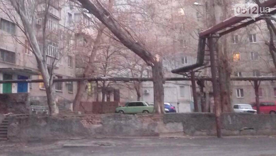 В Николаеве из-за сильного ветра дерево рухнуло на многоэтажку, - ФОТО, фото-1