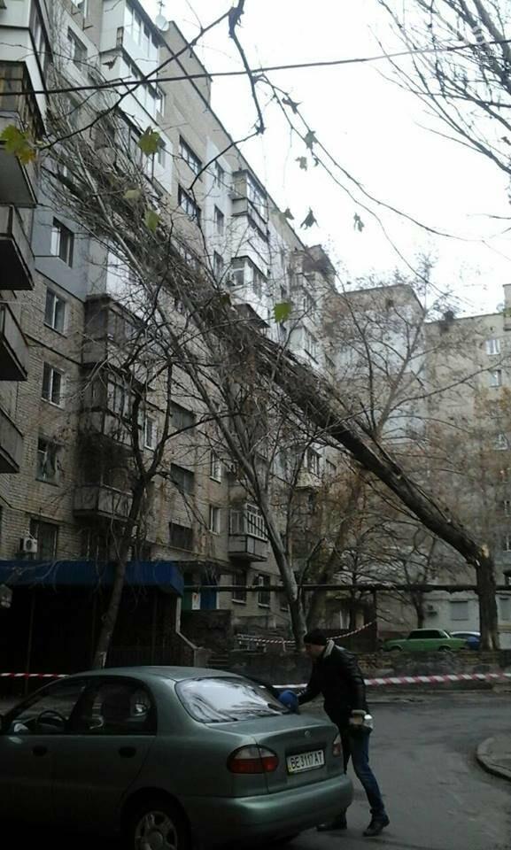 В Николаеве из-за сильного ветра дерево рухнуло на многоэтажку, - ФОТО, фото-4, Лина Бойкив