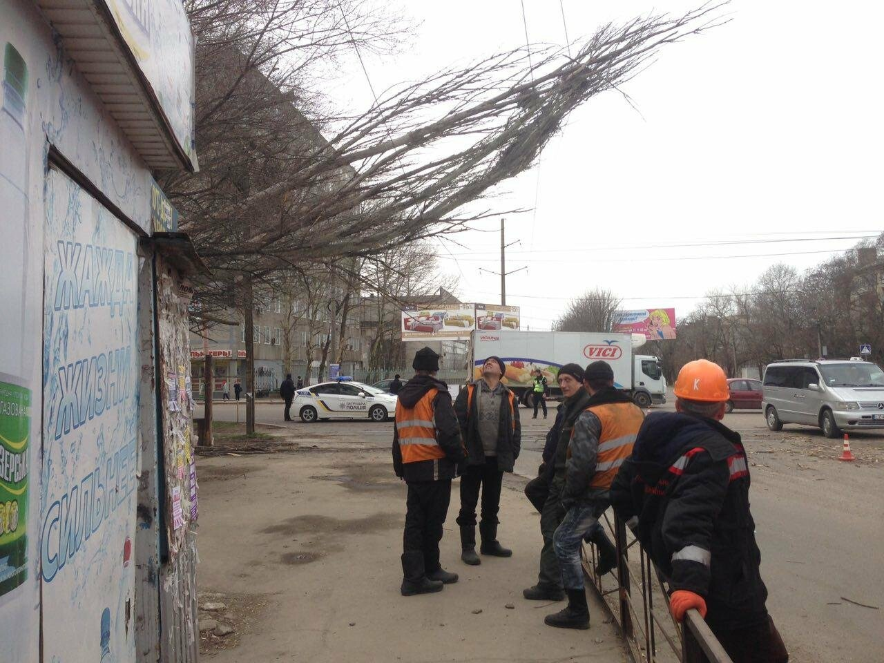 В Николаеве из-за сильного ветра дерево упало на дорогу и задело провода, - ФОТО, фото-2