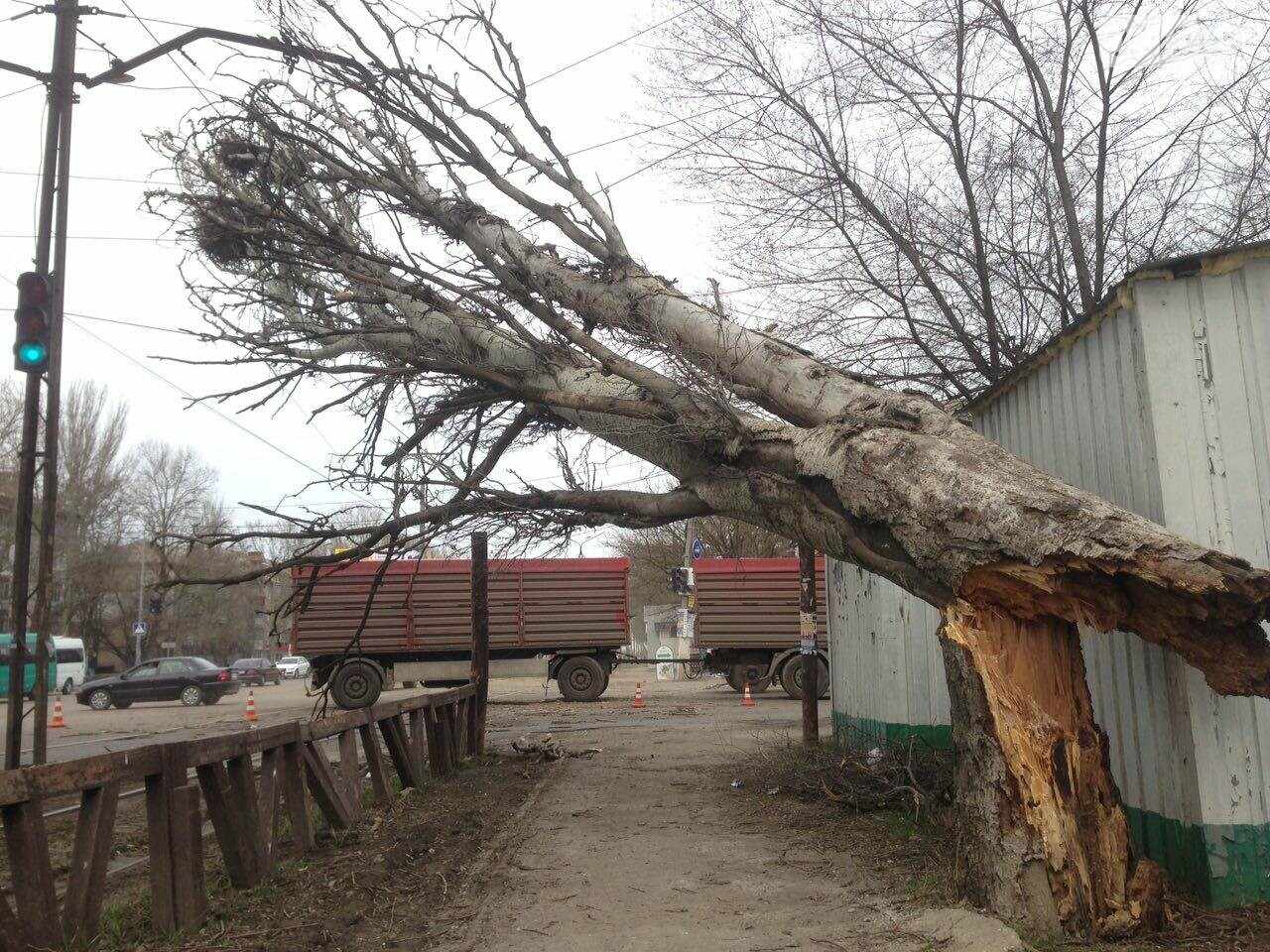 В Николаеве из-за сильного ветра дерево упало на дорогу и задело провода, - ФОТО, фото-5