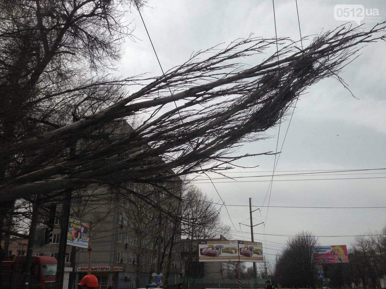 В Николаеве из-за сильного ветра дерево упало на дорогу и задело провода, - ФОТО, фото-4