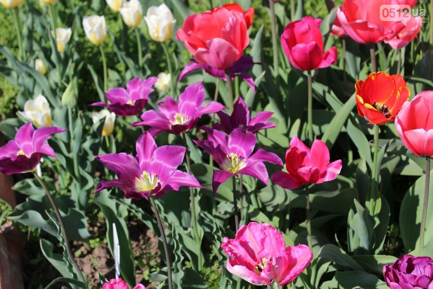 В Николаеве расцвела тюльпановая сказка,- ФОТОРЕПОРТАЖ , фото-7