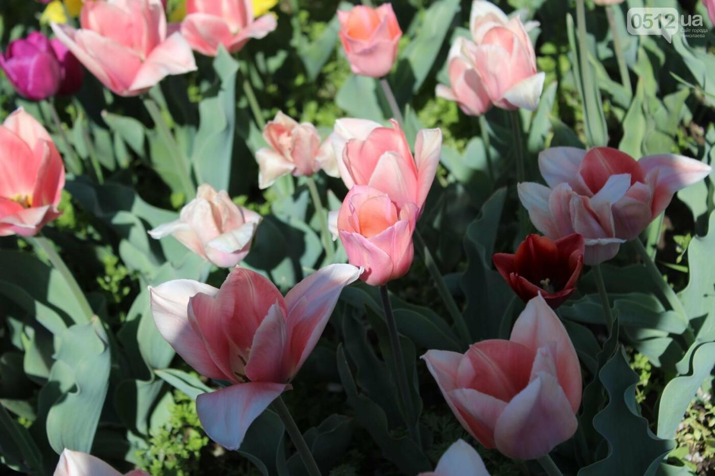 В Николаеве расцвела тюльпановая сказка,- ФОТОРЕПОРТАЖ , фото-1