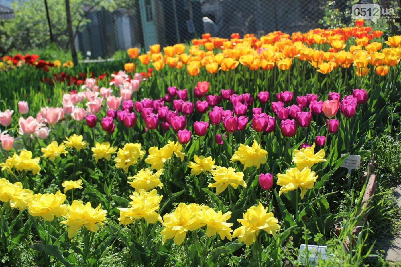 В Николаеве расцвела тюльпановая сказка,- ФОТОРЕПОРТАЖ , фото-9