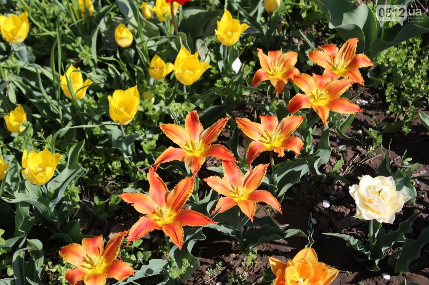 В Николаеве расцвела тюльпановая сказка,- ФОТОРЕПОРТАЖ , фото-8
