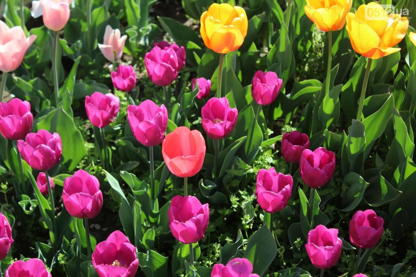 В Николаеве расцвела тюльпановая сказка,- ФОТОРЕПОРТАЖ , фото-3