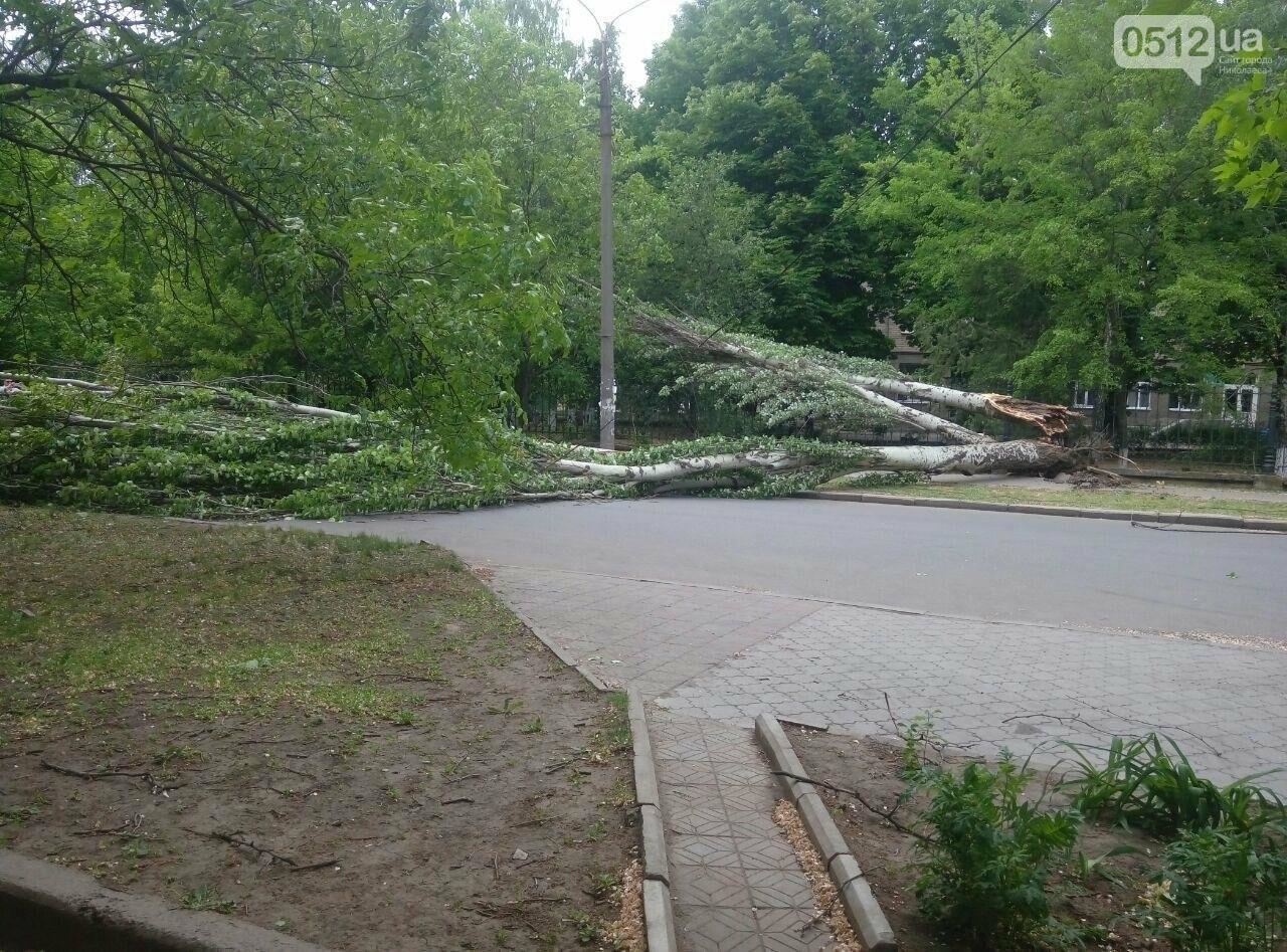 В Николаеве  повреждена линия электропередач из-за падения дерева, - ФОТО, фото-2