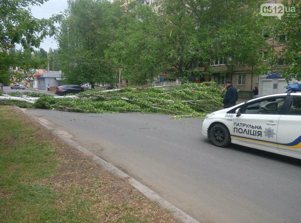 В Николаеве  повреждена линия электропередач из-за падения дерева, - ФОТО, фото-3