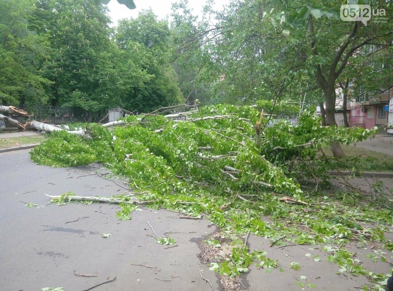 В Николаеве  повреждена линия электропередач из-за падения дерева, - ФОТО, фото-4