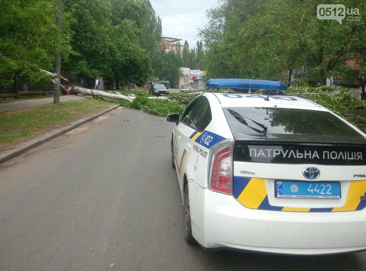 В Николаеве  повреждена линия электропередач из-за падения дерева, - ФОТО, фото-1