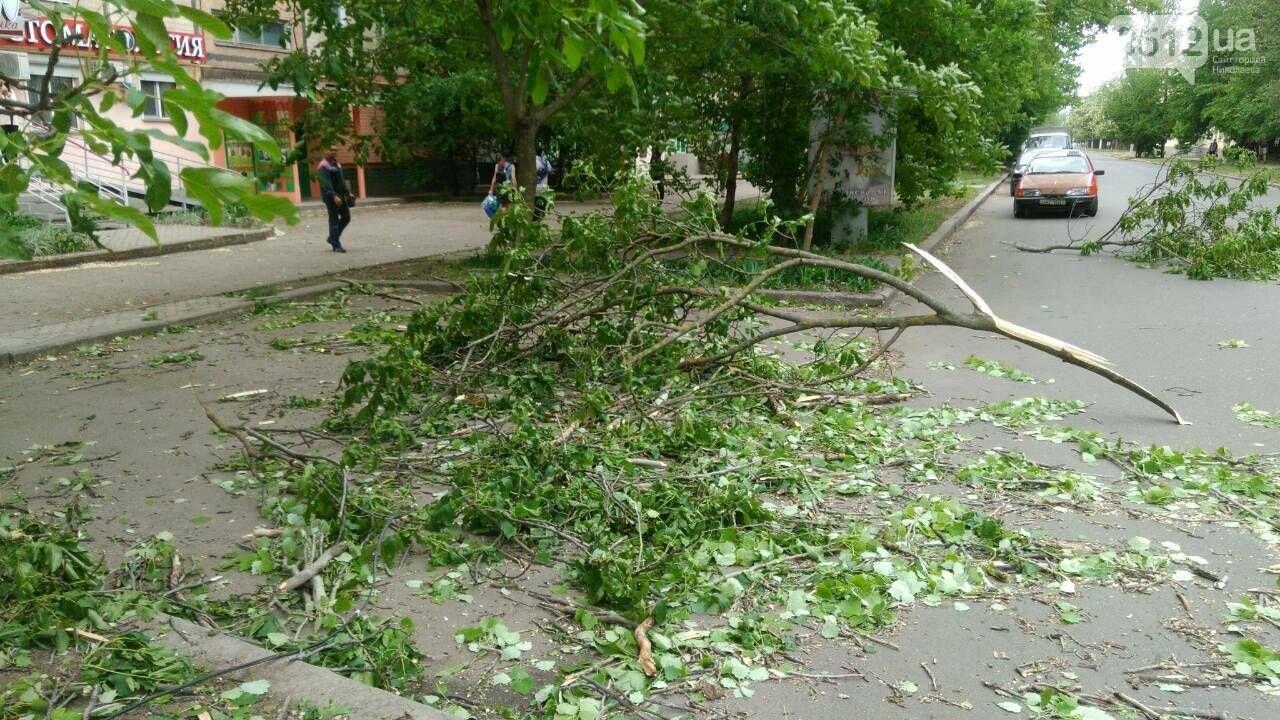 В Николаеве  повреждена линия электропередач из-за падения дерева, - ФОТО, фото-6