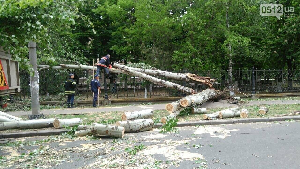 В Николаеве  повреждена линия электропередач из-за падения дерева, - ФОТО, фото-7
