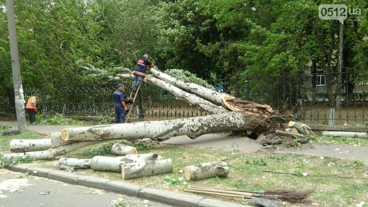 В Николаеве  повреждена линия электропередач из-за падения дерева, - ФОТО, фото-8
