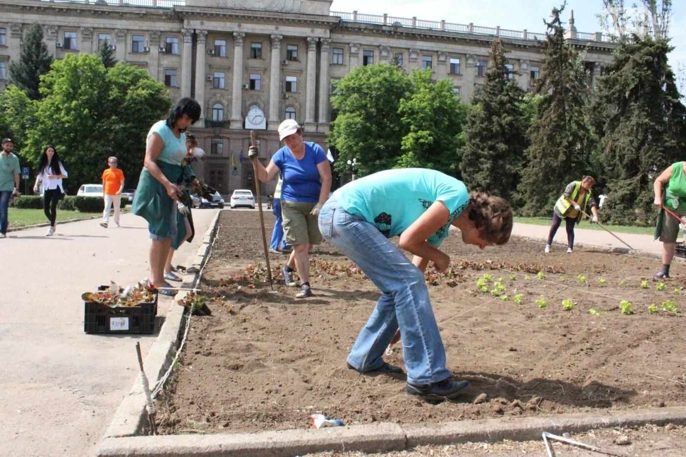 На Соборной площади начали высаживать цветы, - ФОТО, фото-2