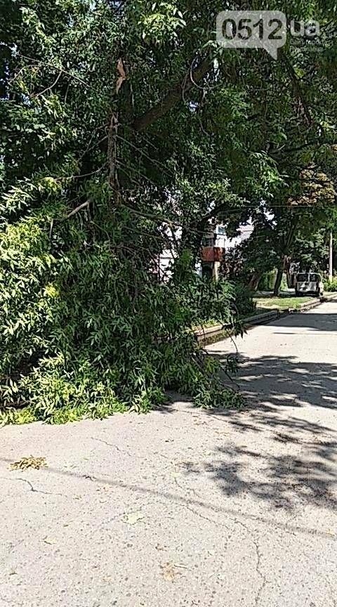 В Николаеве из-за грозы дерево упало на электропровода и повисло, - ФОТО, фото-1