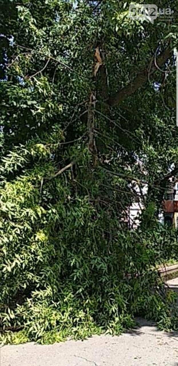 В Николаеве из-за грозы дерево упало на электропровода и повисло, - ФОТО, фото-2