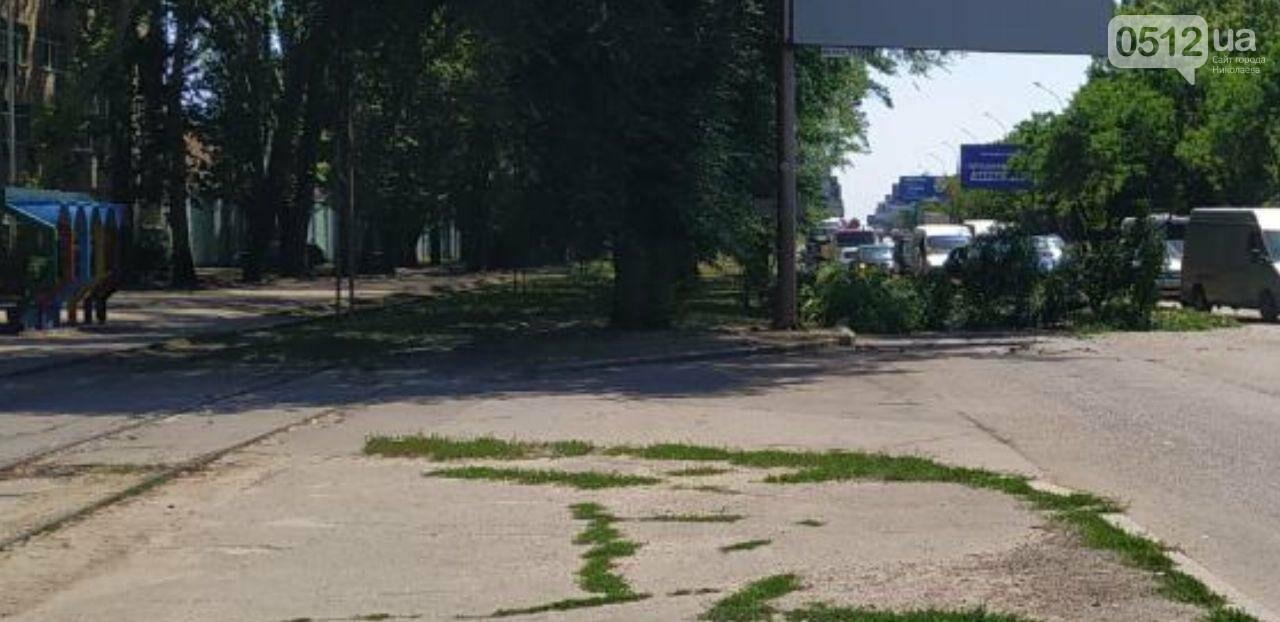 В Николаеве упавшая ветвь обездвижила проспект, - ФОТО, фото-1