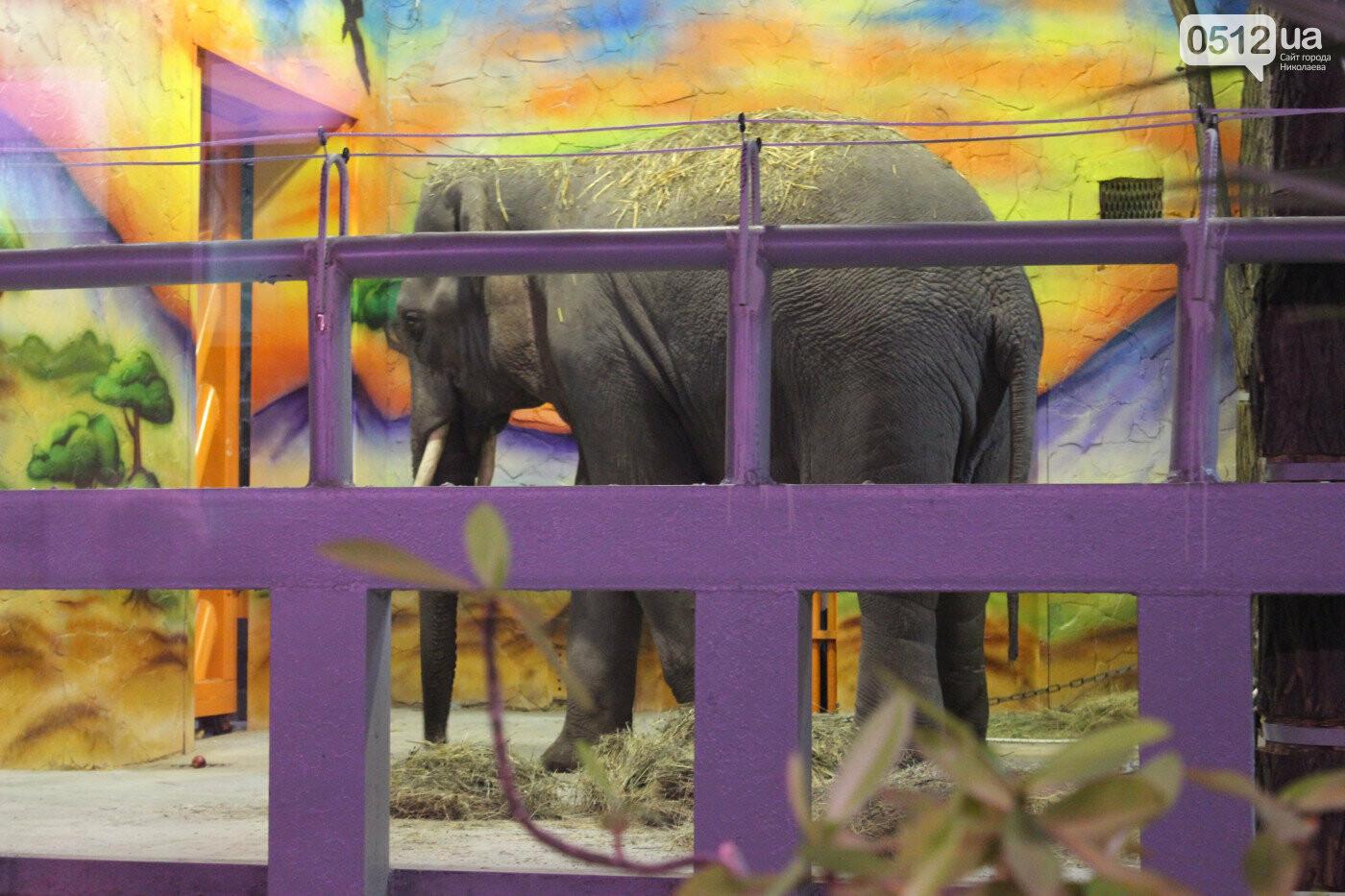 Жирафы ссорятся, а слоны играют: в Николаевском зоопарке рассказали о новичках, - ВИДЕО, фото-2