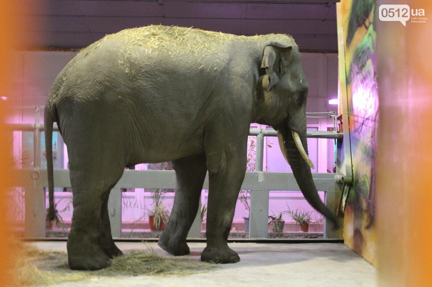Жирафы ссорятся, а слоны играют: в Николаевском зоопарке рассказали о новичках, - ВИДЕО, фото-3