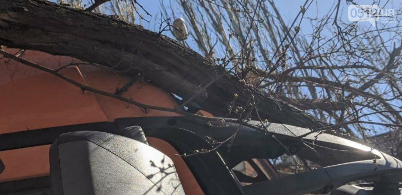 В центре Николаева седельный тягач врезался в ветку дерева, - ФОТО, фото-1