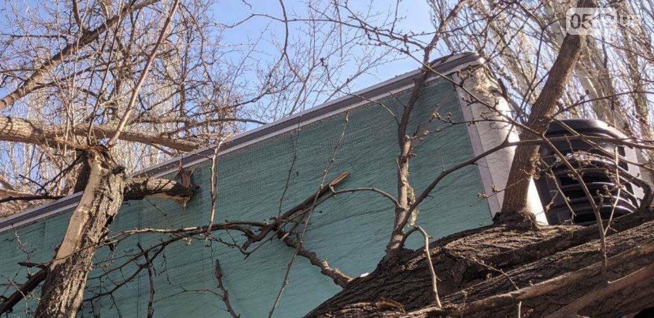 В центре Николаева седельный тягач врезался в ветку дерева, - ФОТО, фото-2