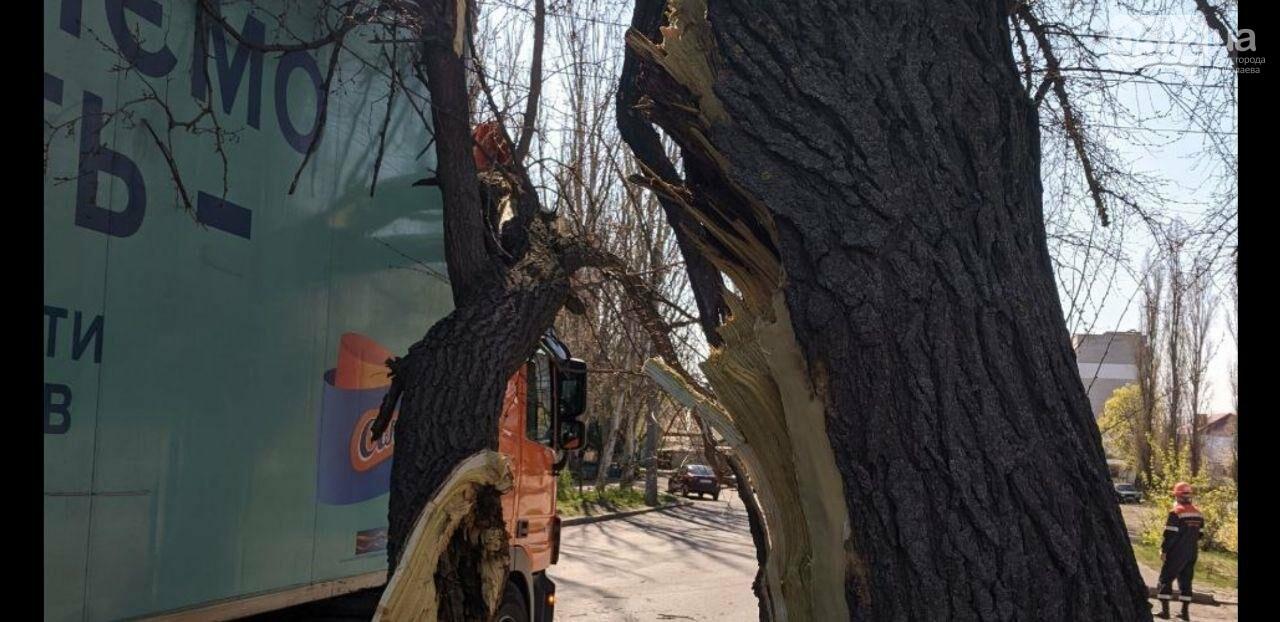 В центре Николаева седельный тягач врезался в ветку дерева, - ФОТО, фото-3