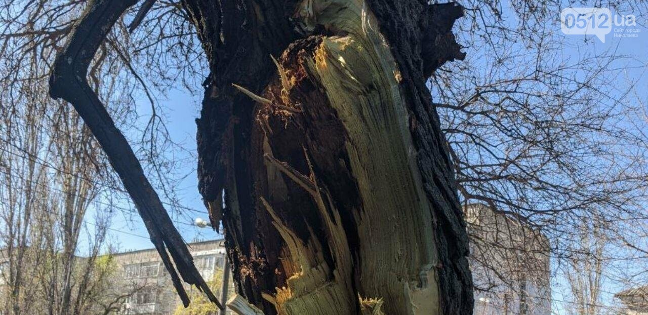 В центре Николаева седельный тягач врезался в ветку дерева, - ФОТО, фото-4