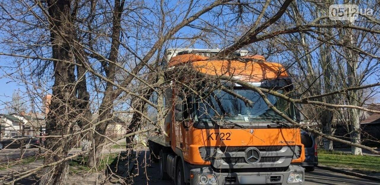 В центре Николаева седельный тягач врезался в ветку дерева, - ФОТО, фото-9
