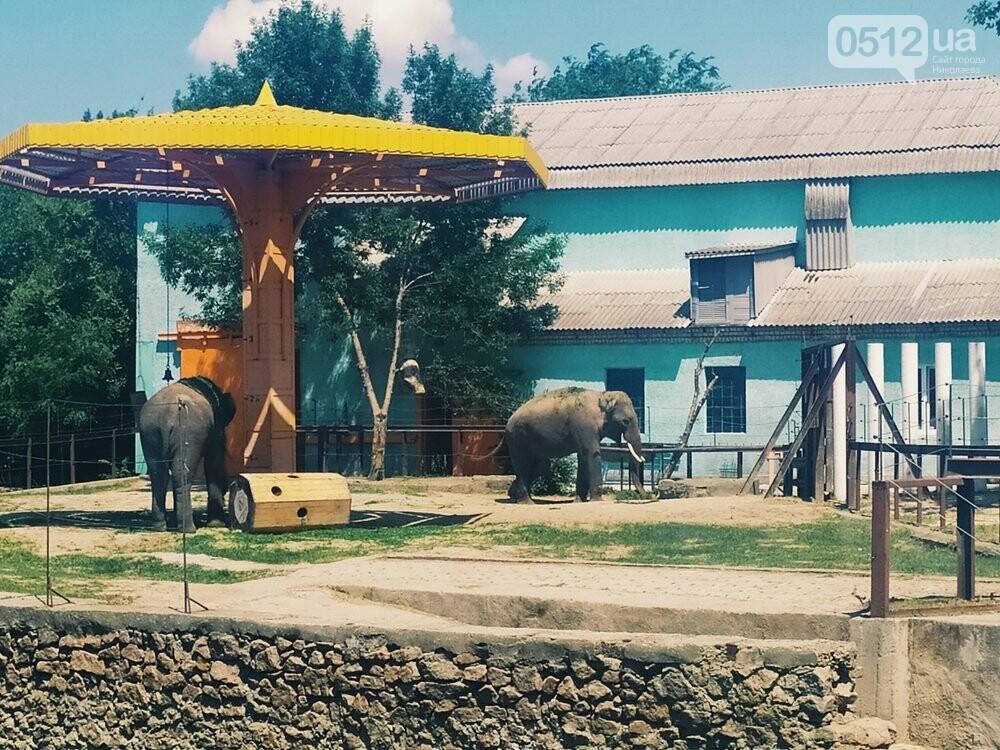 Знойное лето: как поживают животные в николаевском зоопарке, - ФОТОРЕПОРТАЖ , фото-1