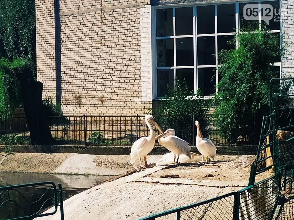 Знойное лето: как поживают животные в николаевском зоопарке, - ФОТОРЕПОРТАЖ , фото-14