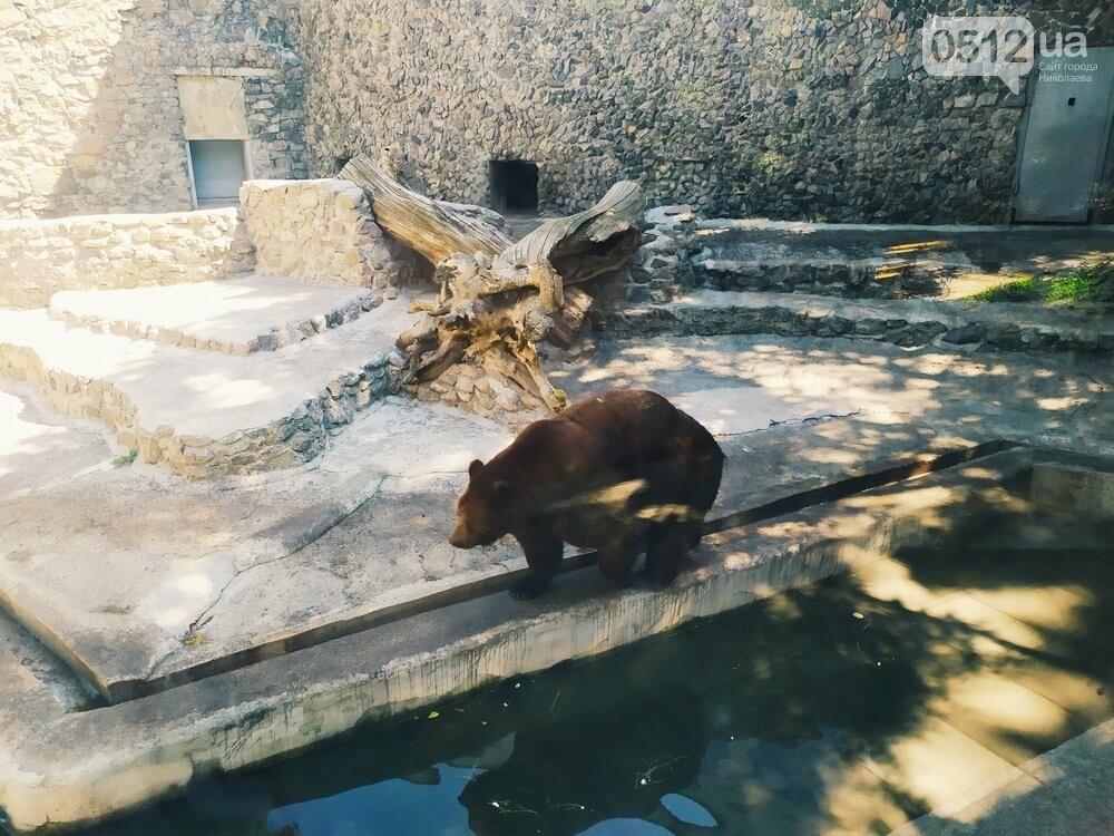 Знойное лето: как поживают животные в николаевском зоопарке, - ФОТОРЕПОРТАЖ , фото-12