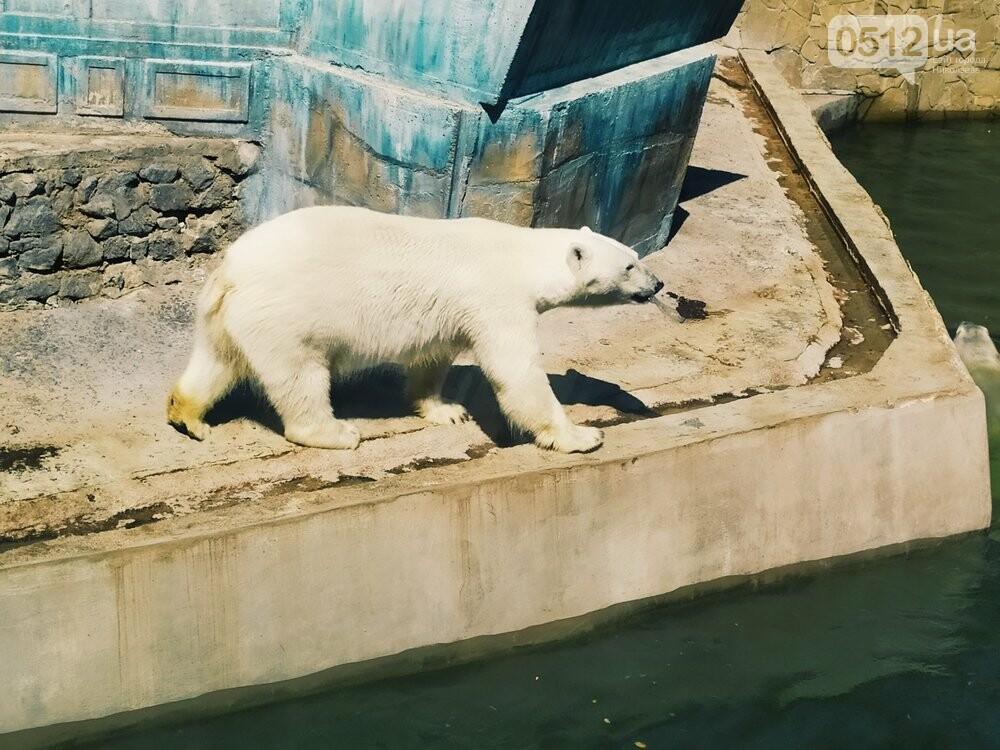 Знойное лето: как поживают животные в николаевском зоопарке, - ФОТОРЕПОРТАЖ , фото-13