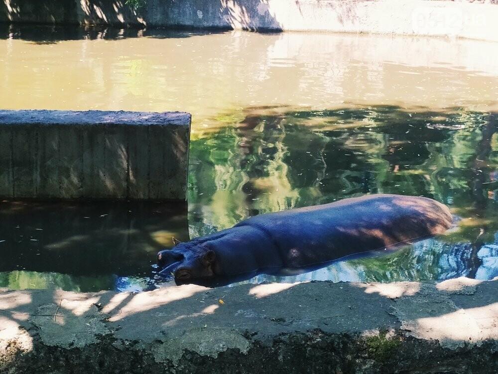 Знойное лето: как поживают животные в николаевском зоопарке, - ФОТОРЕПОРТАЖ , фото-9