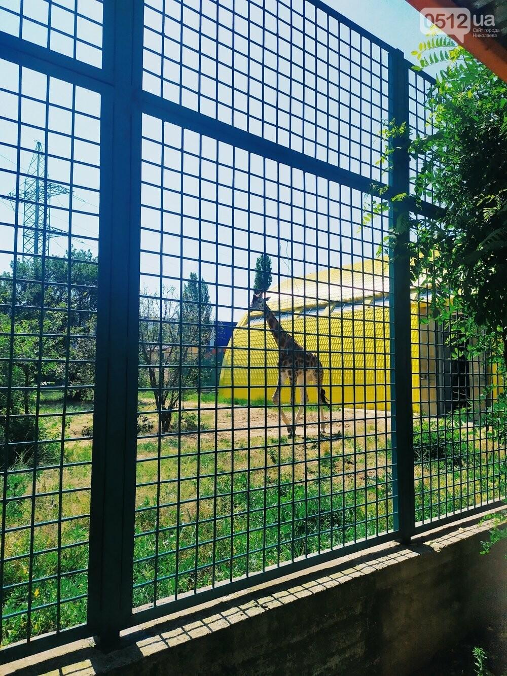 Знойное лето: как поживают животные в николаевском зоопарке, - ФОТОРЕПОРТАЖ , фото-5