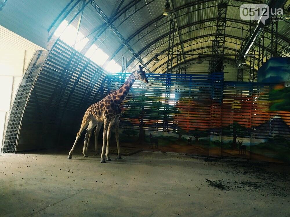 Знойное лето: как поживают животные в николаевском зоопарке, - ФОТОРЕПОРТАЖ , фото-2