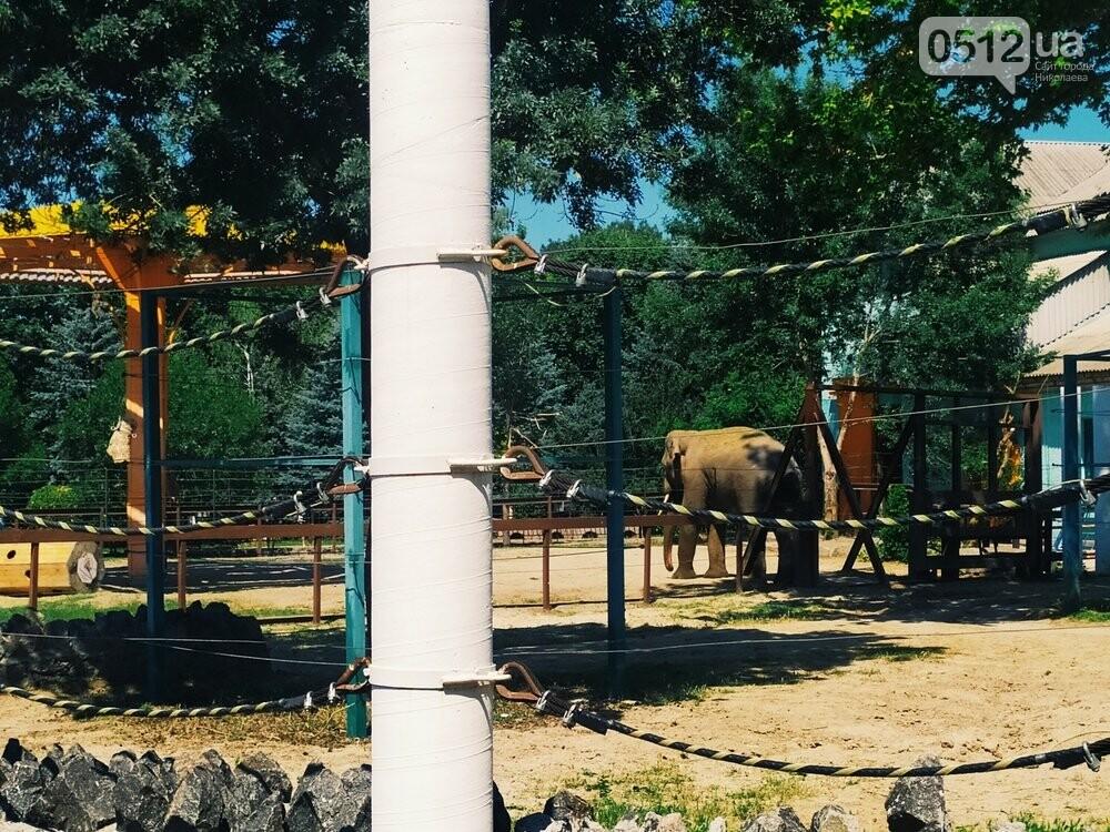 Знойное лето: как поживают животные в николаевском зоопарке, - ФОТОРЕПОРТАЖ , фото-3