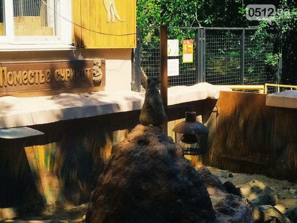 Знойное лето: как поживают животные в николаевском зоопарке, - ФОТОРЕПОРТАЖ , фото-6
