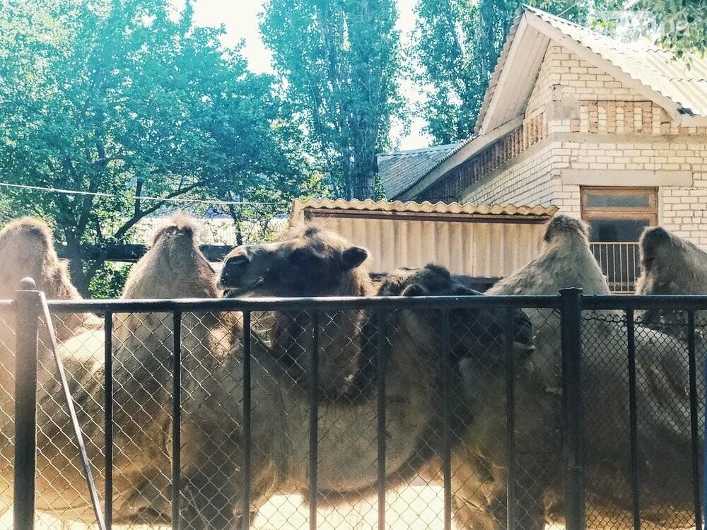 Знойное лето: как поживают животные в николаевском зоопарке, - ФОТОРЕПОРТАЖ , фото-8