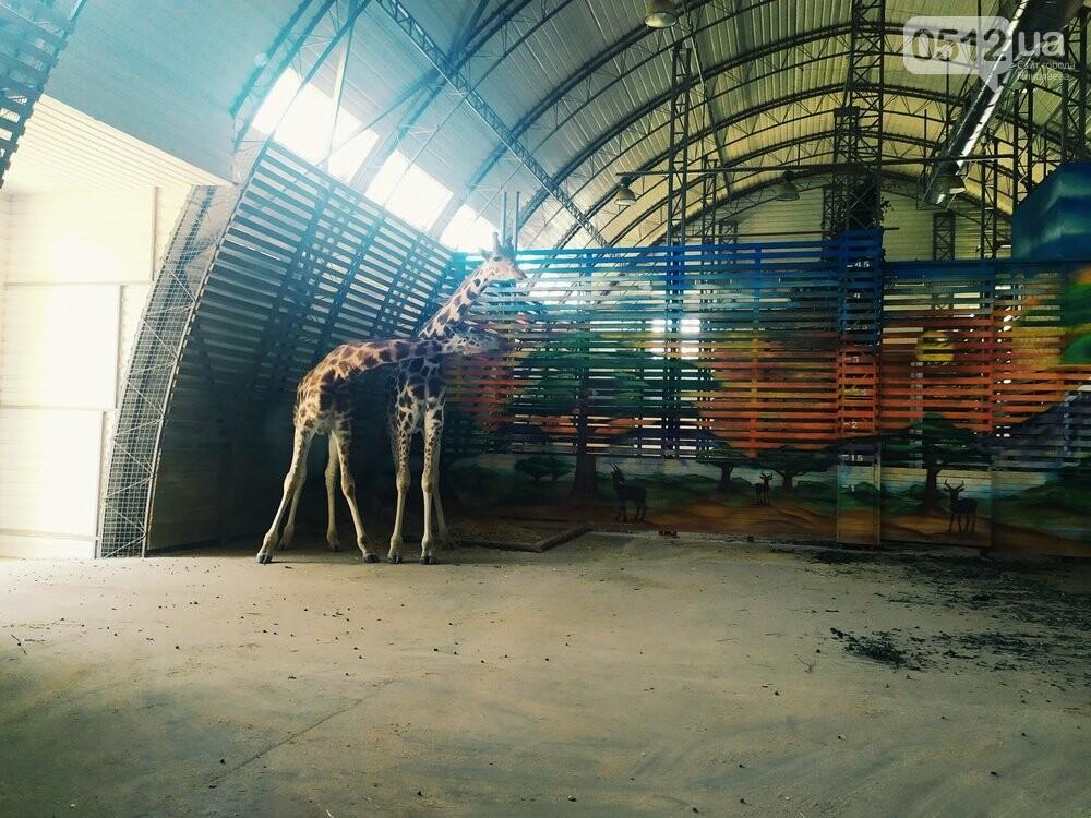 Знойное лето: как поживают животные в николаевском зоопарке, - ФОТОРЕПОРТАЖ , фото-4