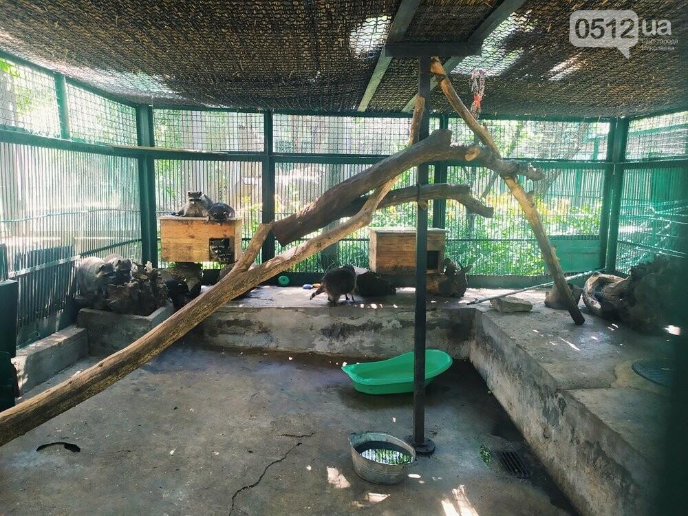 Знойное лето: как поживают животные в николаевском зоопарке, - ФОТОРЕПОРТАЖ , фото-16