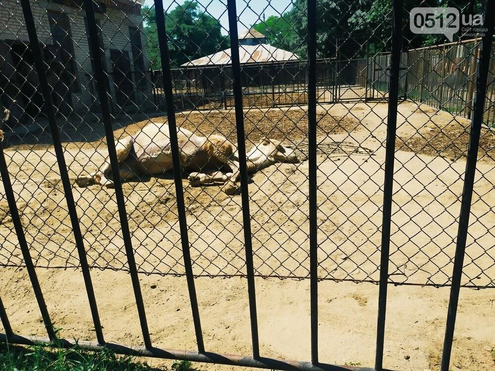 Знойное лето: как поживают животные в николаевском зоопарке, - ФОТОРЕПОРТАЖ , фото-10