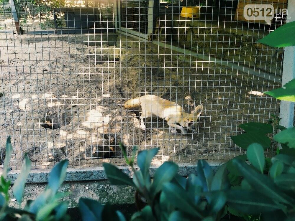 Знойное лето: как поживают животные в николаевском зоопарке, - ФОТОРЕПОРТАЖ , фото-15