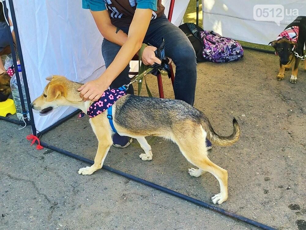 В Николаеве прошла выставка беспородных собак: многие хвостатые обрели новый дом, - ФОТО, фото-21