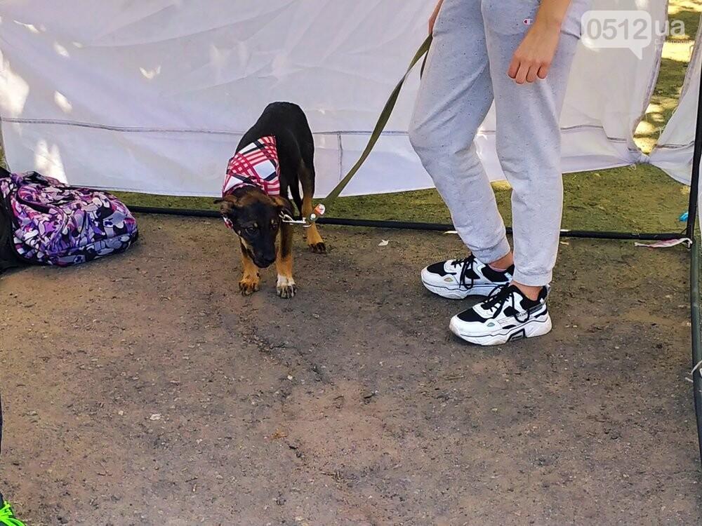 В Николаеве прошла выставка беспородных собак: многие хвостатые обрели новый дом, - ФОТО, фото-20
