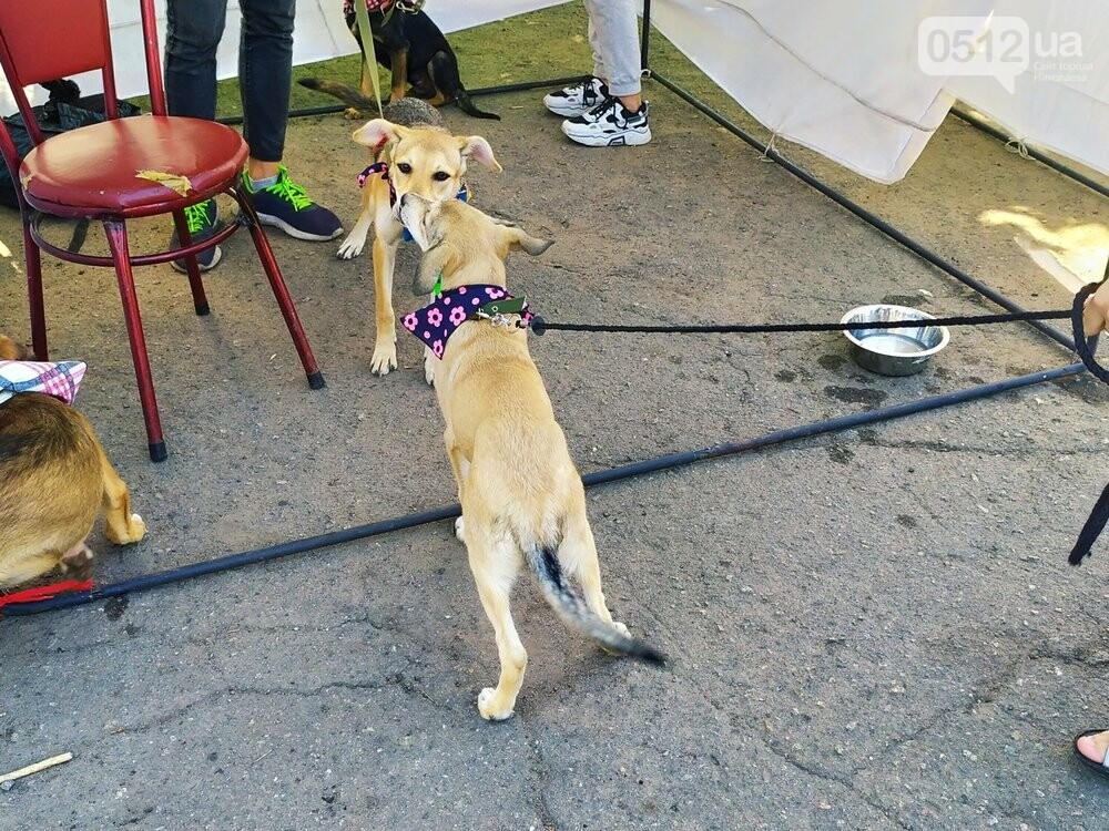 В Николаеве прошла выставка беспородных собак: многие хвостатые обрели новый дом, - ФОТО, фото-19