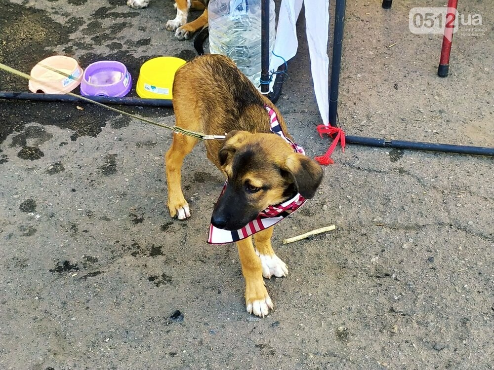 В Николаеве прошла выставка беспородных собак: многие хвостатые обрели новый дом, - ФОТО, фото-18