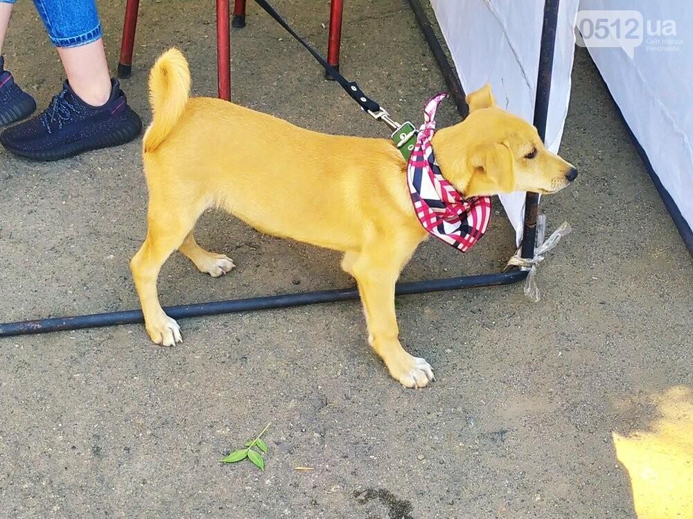 В Николаеве прошла выставка беспородных собак: многие хвостатые обрели новый дом, - ФОТО, фото-16