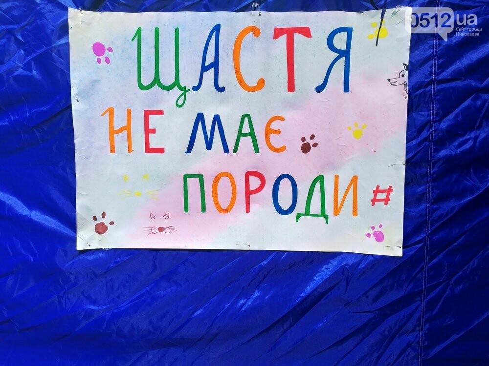В Николаеве прошла выставка беспородных собак: многие хвостатые обрели новый дом, - ФОТО, фото-13