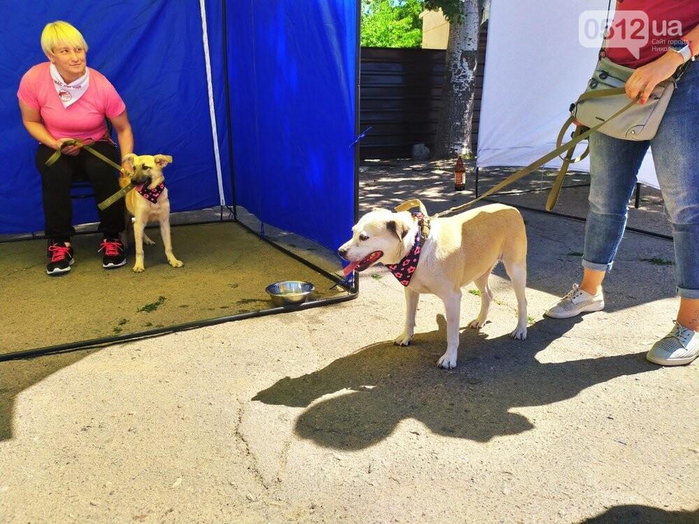 В Николаеве прошла выставка беспородных собак: многие хвостатые обрели новый дом, - ФОТО, фото-12